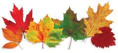 pumpkin-autumn-challenge2