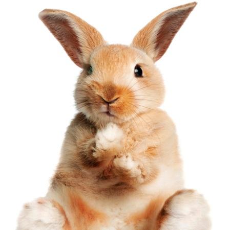 unpopular-opinions-lapins.jpg